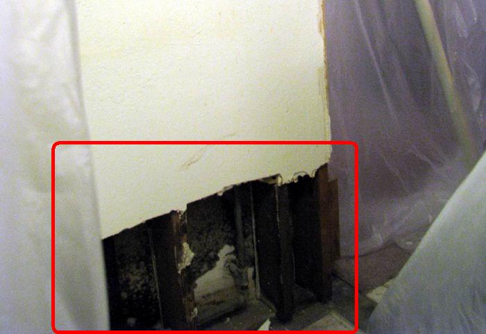 Black Mold In Walls mold!!! » tranquility computers
